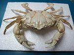 Crabe n°01