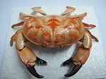 Crabe n°02