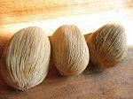 Graine : Coco serra